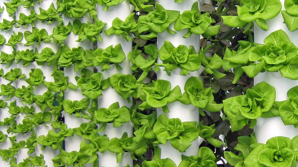 Aeroponic Growing Nutrients Systems Gardening Tips For
