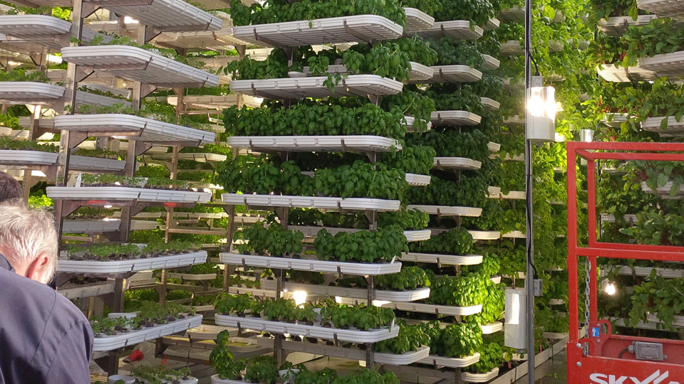 Benefits of Hydroponic Gardening for your Grow Room