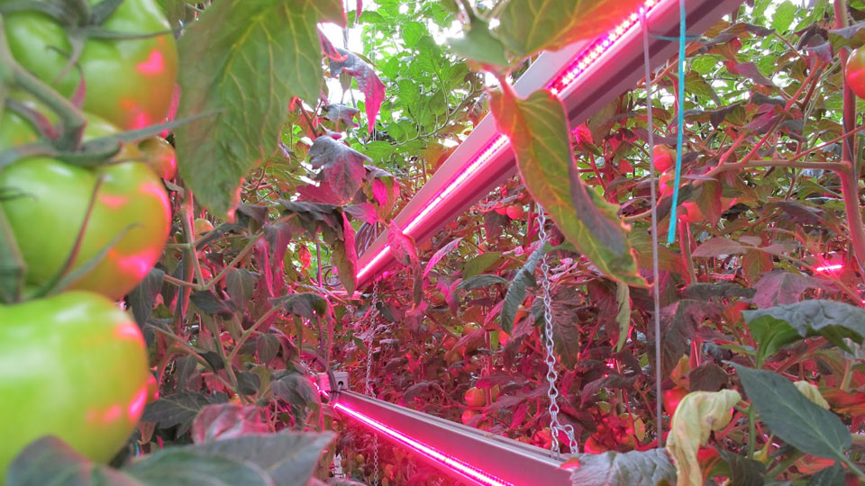 choose-the-hydroponic-grow-lights-that-are-right-for-you