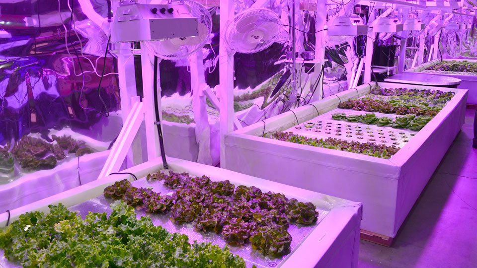 considerations-for-purchasing-your-hydroponics-equipment