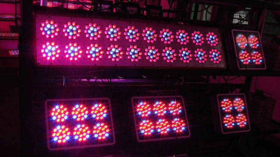 how-to-get-the-most-benefit-from-your-led-grow-lights-2