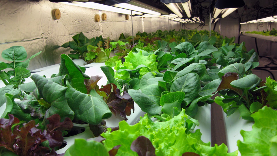 Hydroponic Gardening Supplies and Systems for Environmental Control