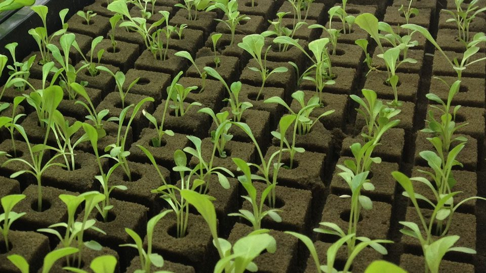 hydroponic-supplies-you-will-need-to-start-your-garden