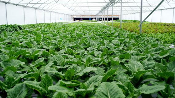 What is hydroponics the advantages to growing indoor for Indoor gardening nutrients