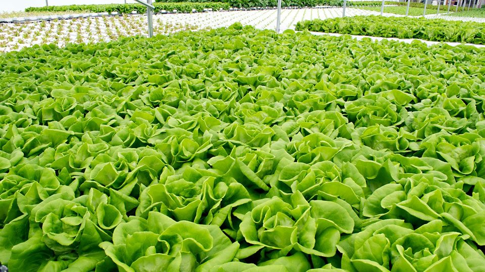 know-about-hydroponics-gardening