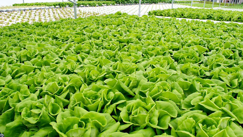 Hydroponic Gardening Guide Advantages of Hydroponic Gardening
