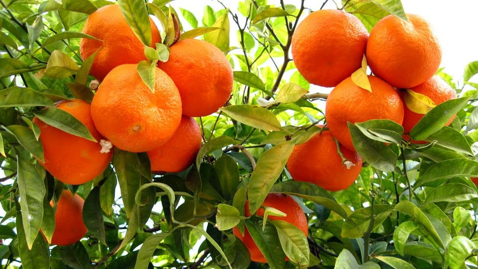 pretty-soon-you-might-be-able-to-grow-oranges-in-new-york