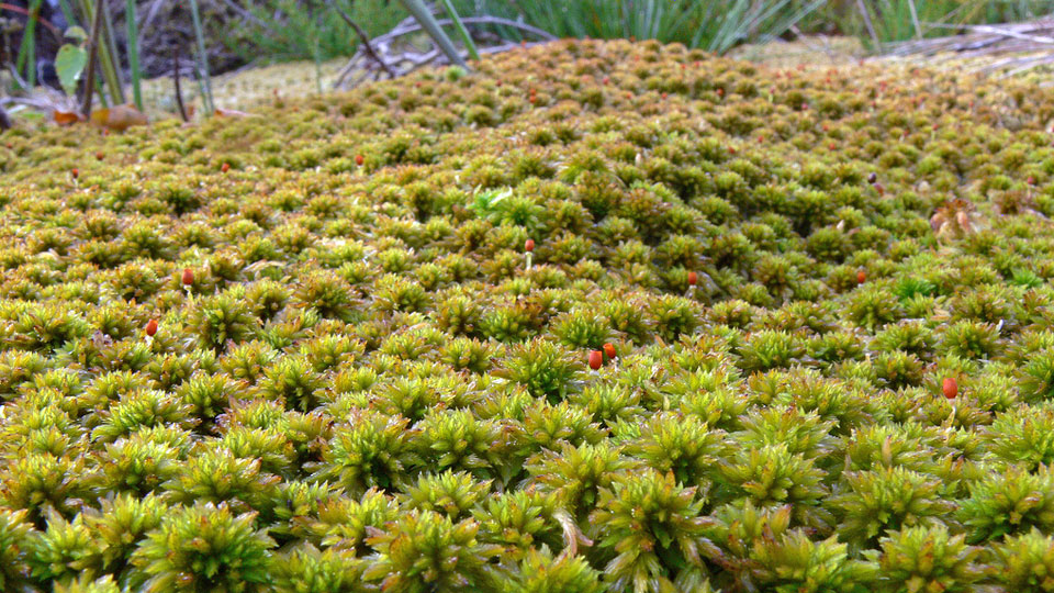sphagnum-moss-nutrients-pro-tips-for-hydroponics-gardeners