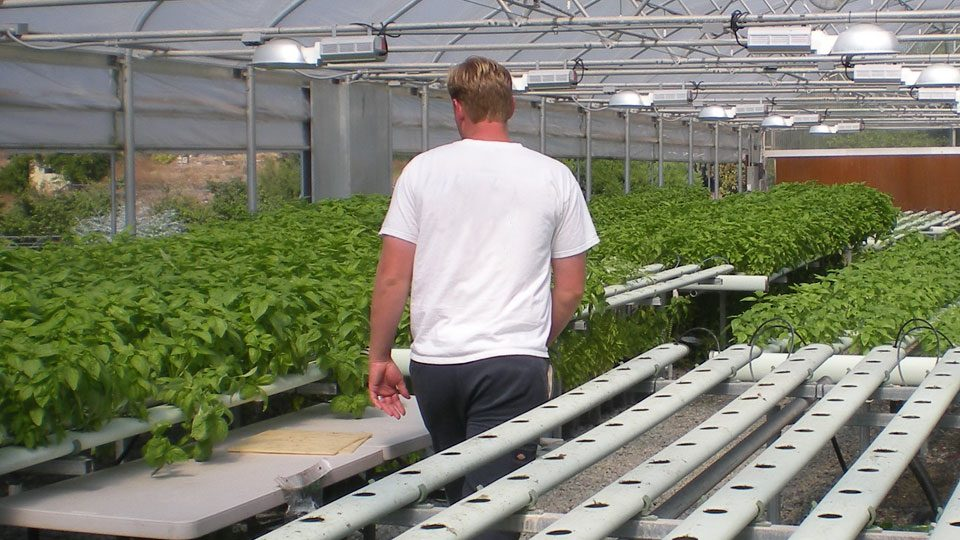 troubleshooting-with-general-hydroponics-growing