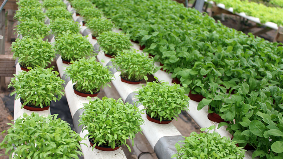 What is hydroponics the advantages to growing indoor for Garden soil definition
