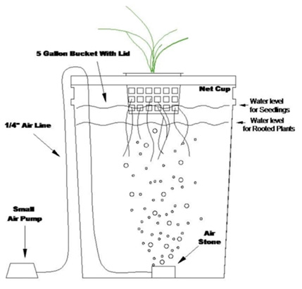 Beginner hydroponics guide – setting up your own DWC hydroponics system