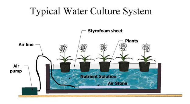 Hydroponics for beginners – DWC hydro system explained