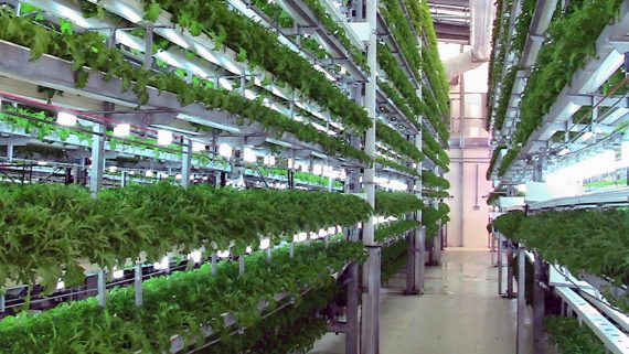 What is Hydroponics? - The Advantages to Growing Indoor Gardens with