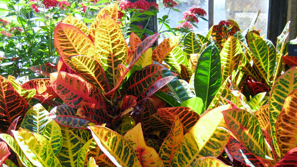 bring-oxygen-and-beauty-into-your-home-or-office-by-growing-happy-houseplants