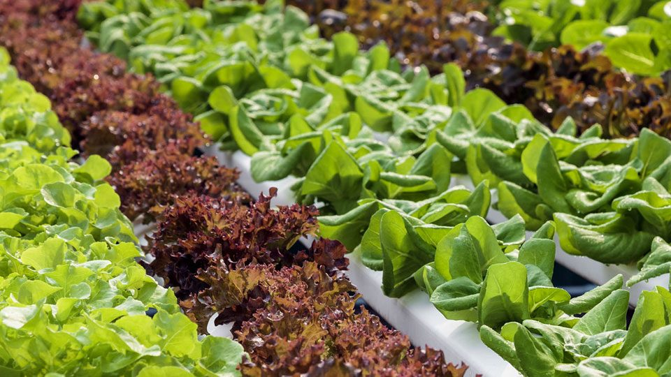 how-to-make-the-most-of-your-hydroponic-grow-enhancer
