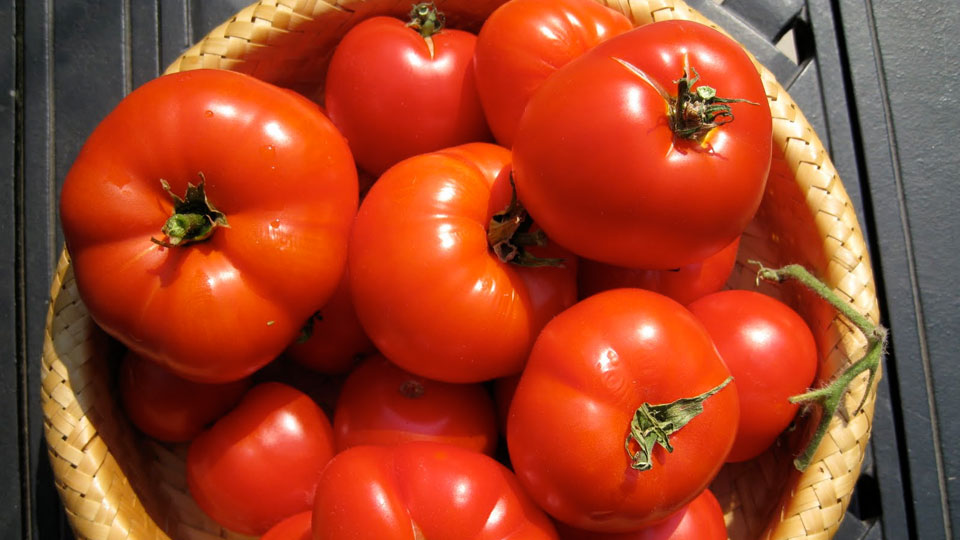 if-you-love-tomatoes-make-them-bigger-healthier-tastier