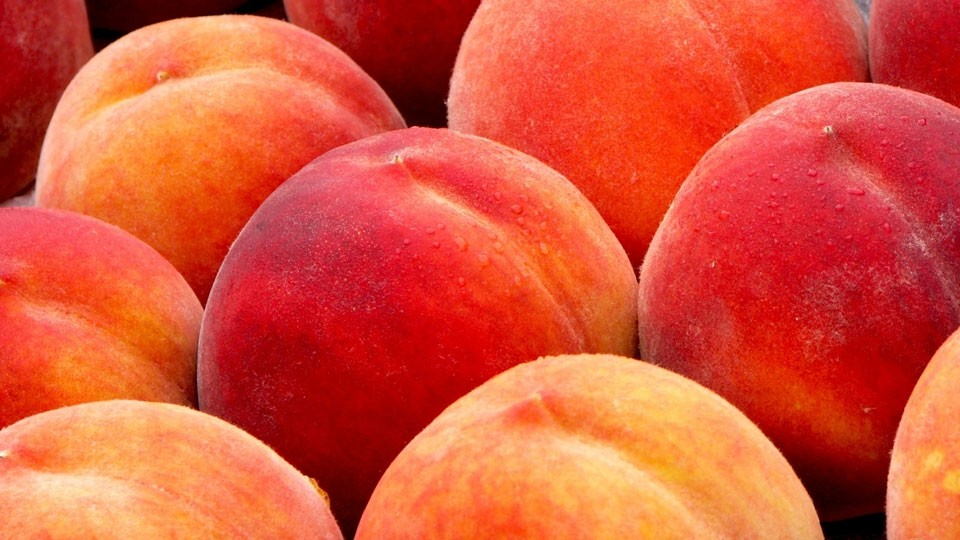 imagine-the-good-feeling-youll–get-growing-your-own-apples-peaches