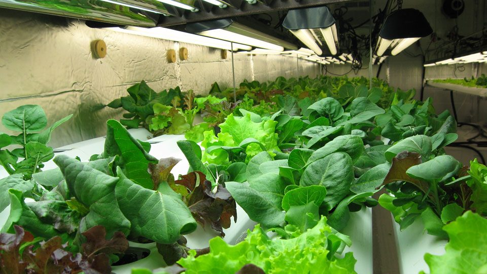tips-for-growing-organically-with-organic-plant-nutrients