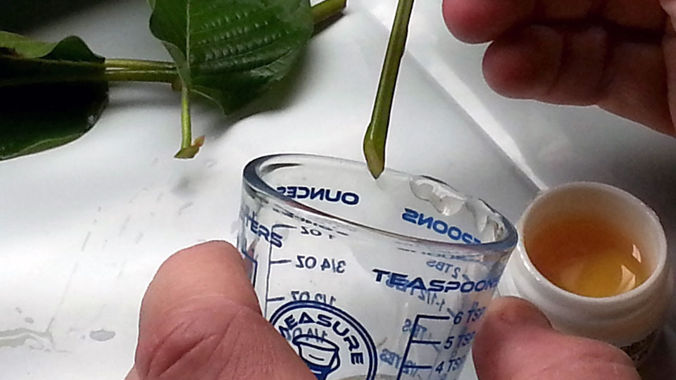 tips-for-using-rooting-gel-on-hard-to-propagate-plants