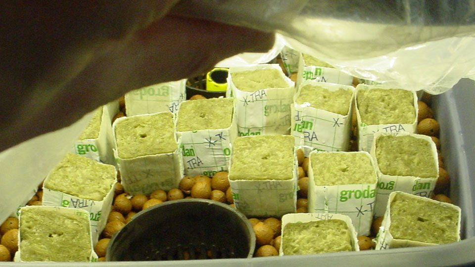 using-rockwool-for-hydroponics