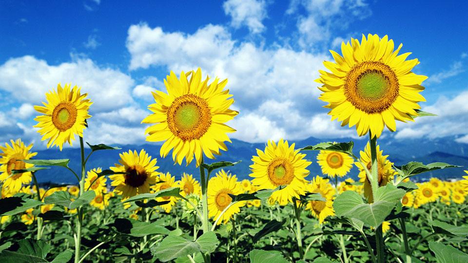 what-makes-flowering-enhancers-work-so-well