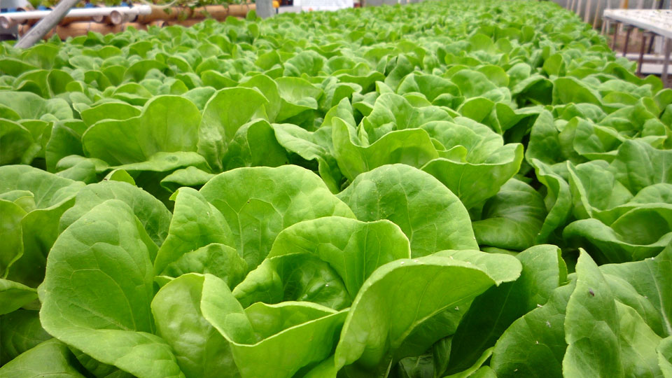 World S Best Hydroponics Nutrients How To Find The Ones For You