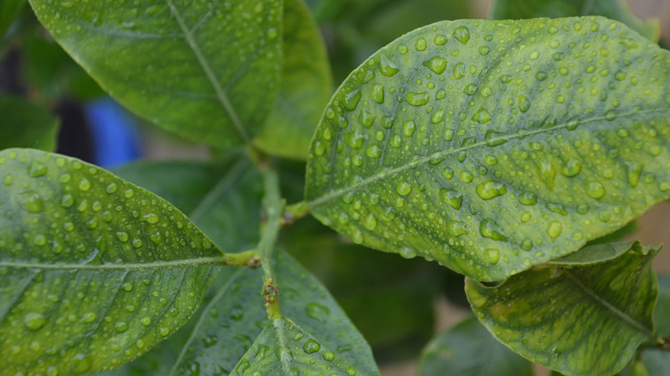 How-to-Get-the-Most-out-of-Your-Foliar-Fertilizer