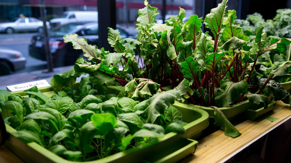 Why-choose-Indoor-Growing-for-Plants-and-Vegetables