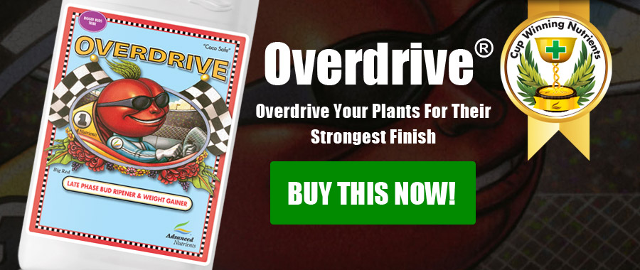 Overdrive® | Late-Phase Bud Ripener & Weight Gainer Formula