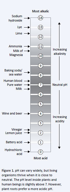 pH Perfect Levels For Hydroponics Plants