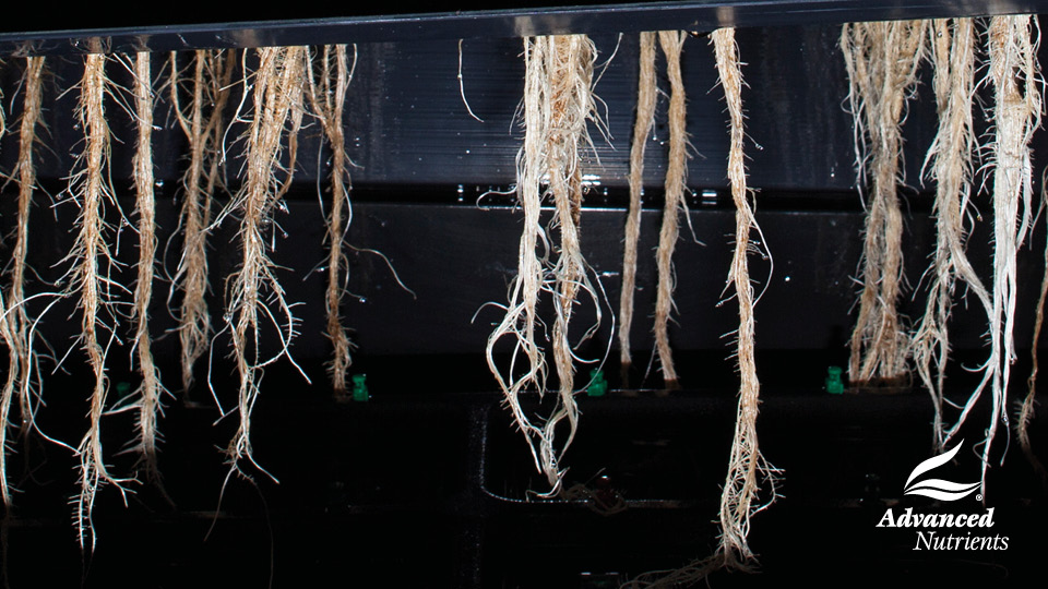 How Can You Identify A Plant Root Problem?