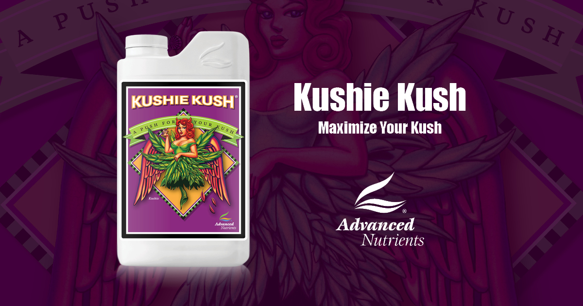 Kushie Kush | Kush-Specific Bloom Booster | Advanced Nutrients
