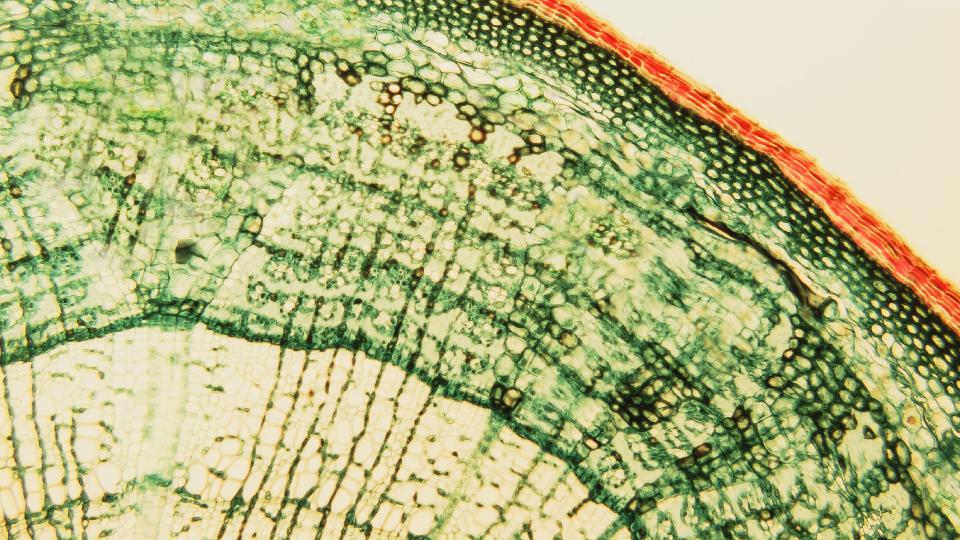 potassium-silicate-for-plants