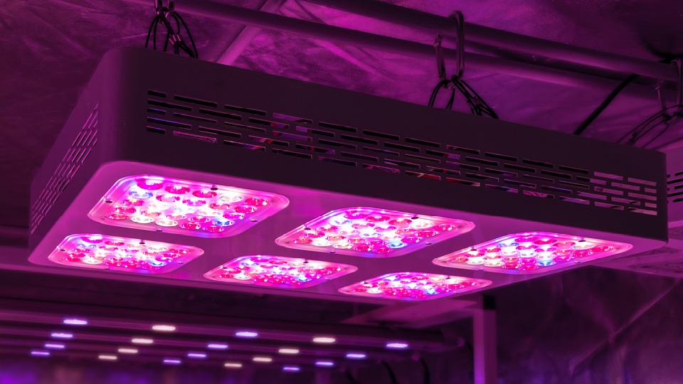 Pros And Cons Of Led Grow Lights